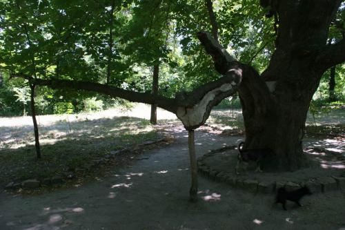 Цікавий спосіб підтримати життя дерева