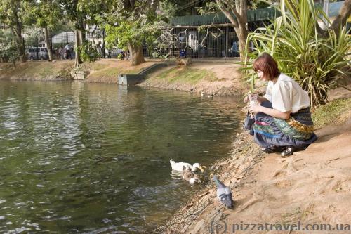 На берегу искусственного озера в Канди