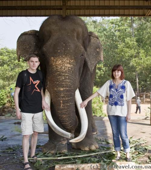 Слепой слоник, возле которого можно сфотографироваться