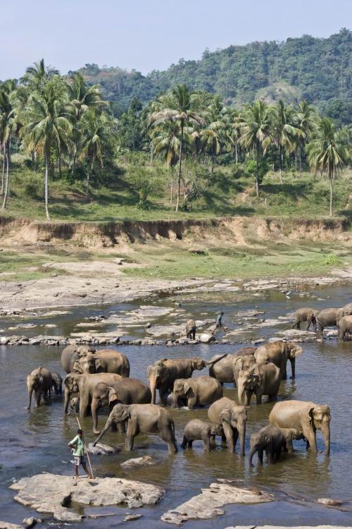 Слоны в Пиннавеле
