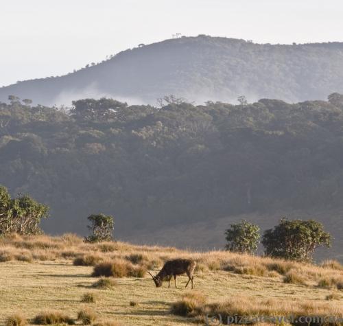 Утренний пейзаж на плато Хортон