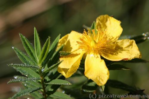 Цветы на плато Хортон