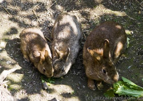 В одном из дворов живут кролики.
