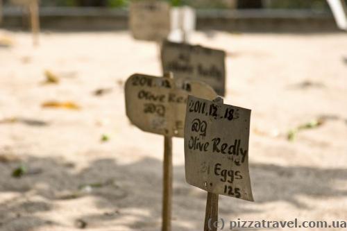 Черепаховые яйца греются в песке.
