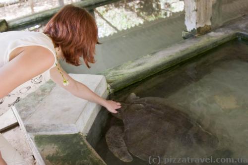 Инкубатор для черепах в Косгоде