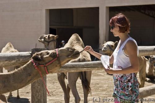 Парк верблюдов