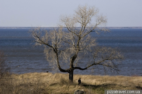 Дерево-тризуб