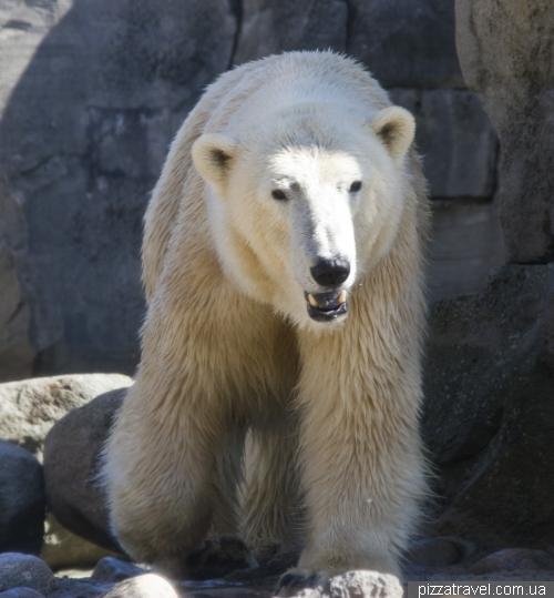 Зоопарк в Бремерхафене