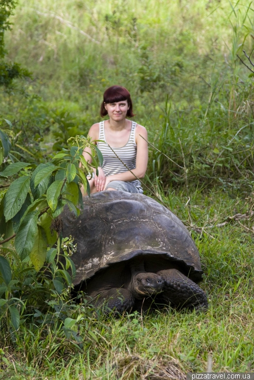 Черепаховый заповедник Эль Чато (Санта-Круз)