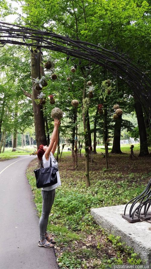 Городской парк в Буче