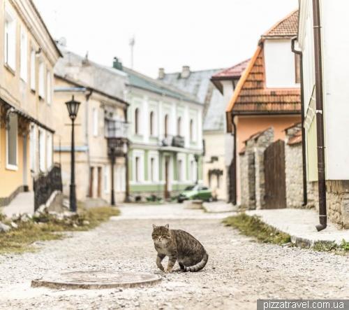 Кот в старом городе Каменца-Подольского