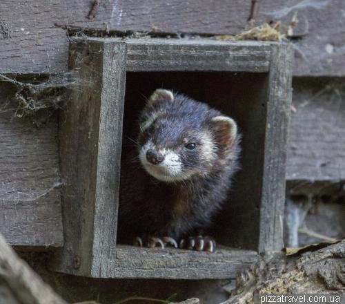 Питомник выдр (Otter-Zentrum)