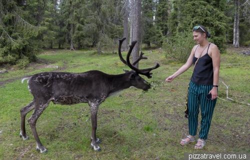Олений парк Салла (Salla Reindeer Park)