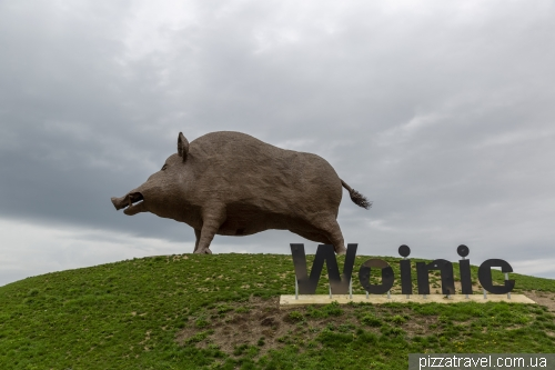 Woinic - the largest wild boar in the world