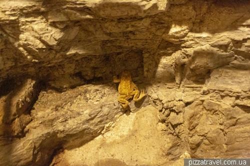 Пещера Падирак (Gouffre de Padirac)