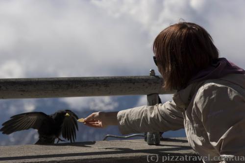 Можно покормить птичку