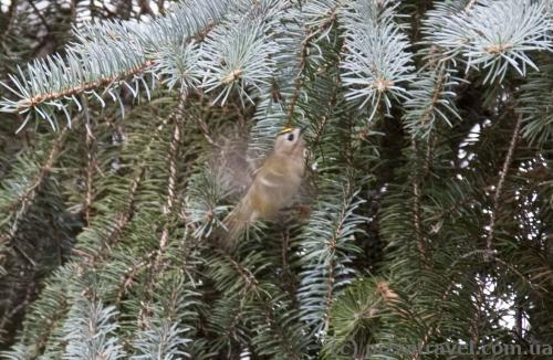 Необычная маленькая птичка в Сырецком дендропарке