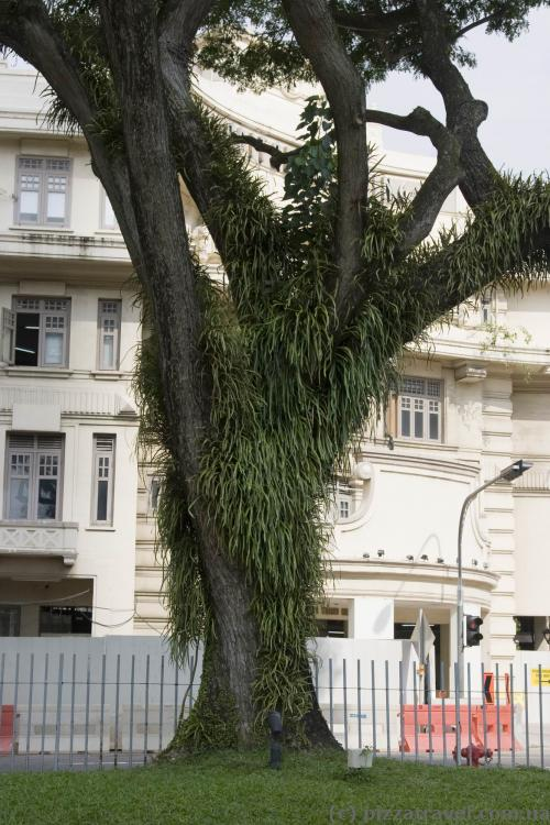 Дерево около станции метро Сити Холл